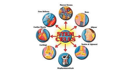 Potencialidades de células madre