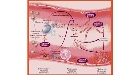 Fisiopatología de la sepsis meningocócica