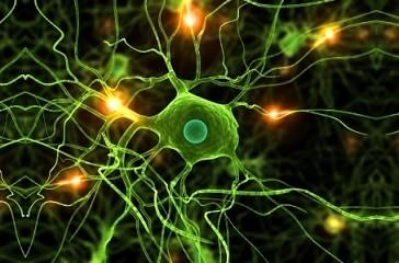 Conexión entre el cerebro y las prótesis robóticas
